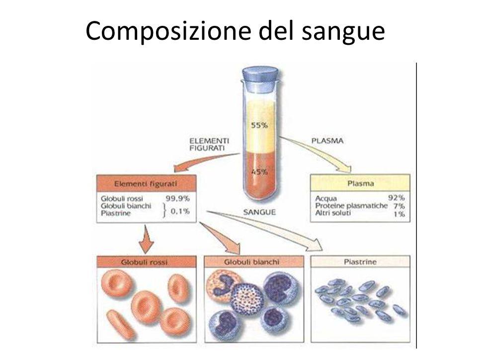 Il sangue è un tessuto connettivo liquido formato per:  il 55 % da una parte liquida chiamata plasma  il 45 % da una parte cellulare (cellule ematiche)