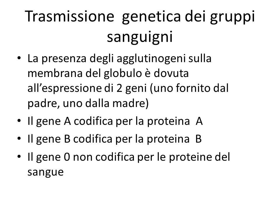Trasmissione genetica dei gruppi sanguigni La presenza degli agglutinogeni sulla membrana del globulo è dovuta all'espressione di 2 geni (uno fornito dal padre, uno dalla madre) Il gene A codifica per la proteina A Il gene B codifica per la proteina B Il gene 0 non codifica per le proteine del sangue