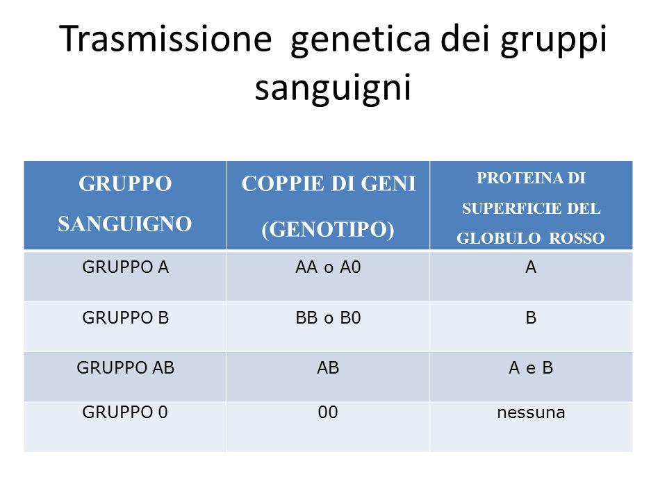 Trasmissione genetica dei gruppi sanguigni GRUPPO SANGUIGNO COPPIE DI GENI (GENOTIPO) PROTEINA DI SUPERFICIE DEL GLOBULO ROSSO GRUPPO AAA o A0A GRUPPO