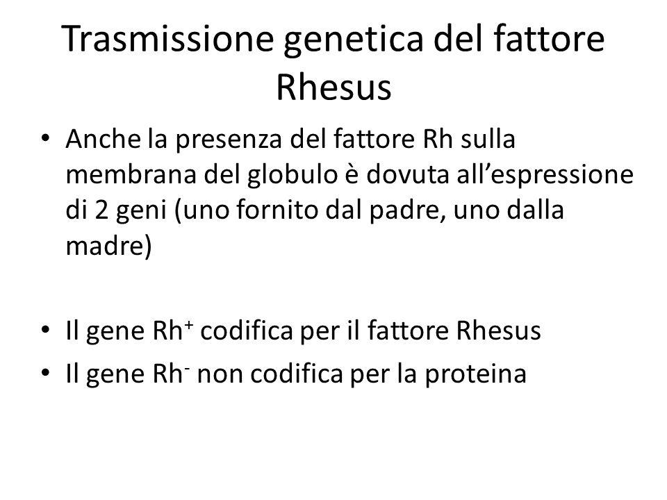 Trasmissione genetica del fattore Rhesus Anche la presenza del fattore Rh sulla membrana del globulo è dovuta all'espressione di 2 geni (uno fornito dal padre, uno dalla madre) Il gene Rh + codifica per il fattore Rhesus Il gene Rh - non codifica per la proteina