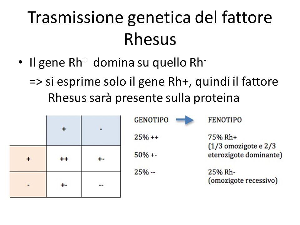 Trasmissione genetica del fattore Rhesus Il gene Rh + domina su quello Rh - => si esprime solo il gene Rh+, quindi il fattore Rhesus sarà presente sul