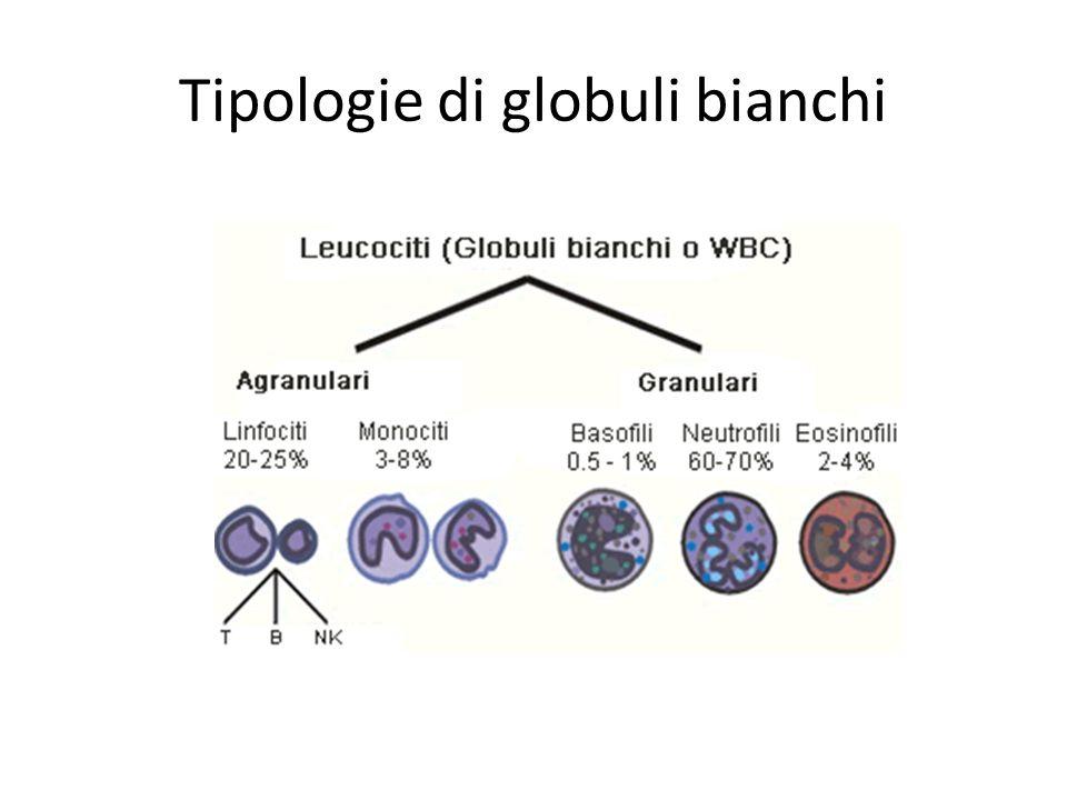 Emoglobina Il legame del CO con l'emoglobina è un legame forte il CO impedisce quindi all'emoglobina di legarsi con le molecole di ossigeno Quando l'emoglobina è legata al CO prende il nome di carbossiemoglobina.