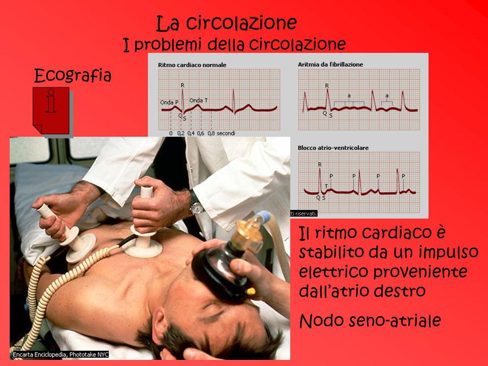 La circolazione I problemi della circolazione Il ritmo cardiaco è stabilito da un impulso elettrico proveniente dall'atrio destro Nodo seno-atriale Ec