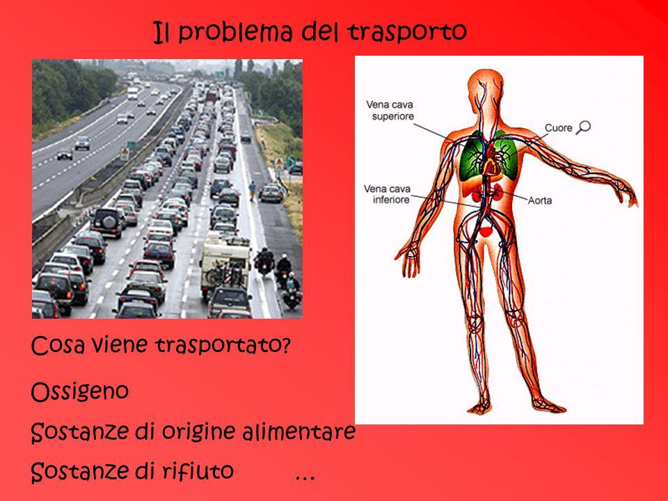 Il problema del trasporto Cosa viene trasportato? Ossigeno Sostanze di origine alimentare Sostanze di rifiuto …