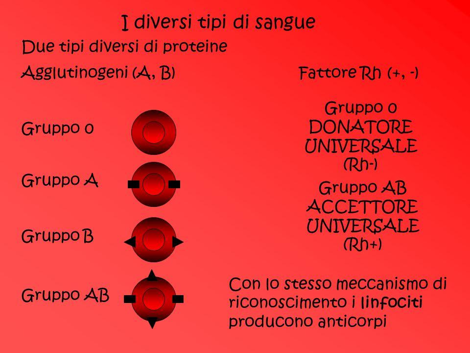 I diversi tipi di sangue Due tipi diversi di proteine Agglutinogeni (A, B) Fattore Rh (+, -) Gruppo 0Gruppo A Gruppo B Gruppo AB Gruppo 0 DONATORE UNI