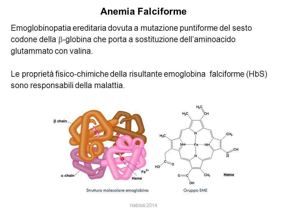 Anemia Falciforme Emoglobinopatia ereditaria dovuta a mutazione puntiforme del sesto codone della  -globina che porta a sostituzione dell'aminoacido glutammato con valina.