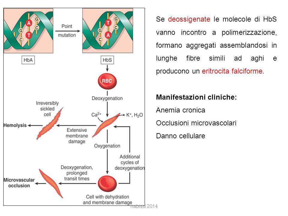 Se deossigenate le molecole di HbS vanno incontro a polimerizzazione, formano aggregati assemblandosi in lunghe fibre simili ad aghi e producono un eritrocita falciforme.