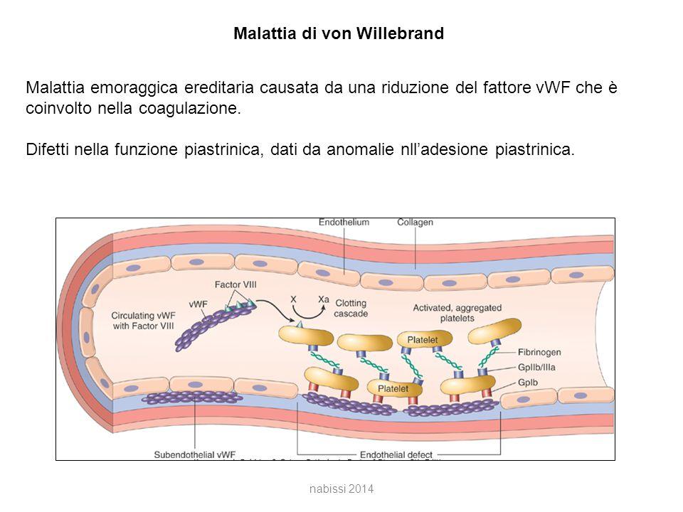 Malattia di von Willebrand Malattia emoraggica ereditaria causata da una riduzione del fattore vWF che è coinvolto nella coagulazione.