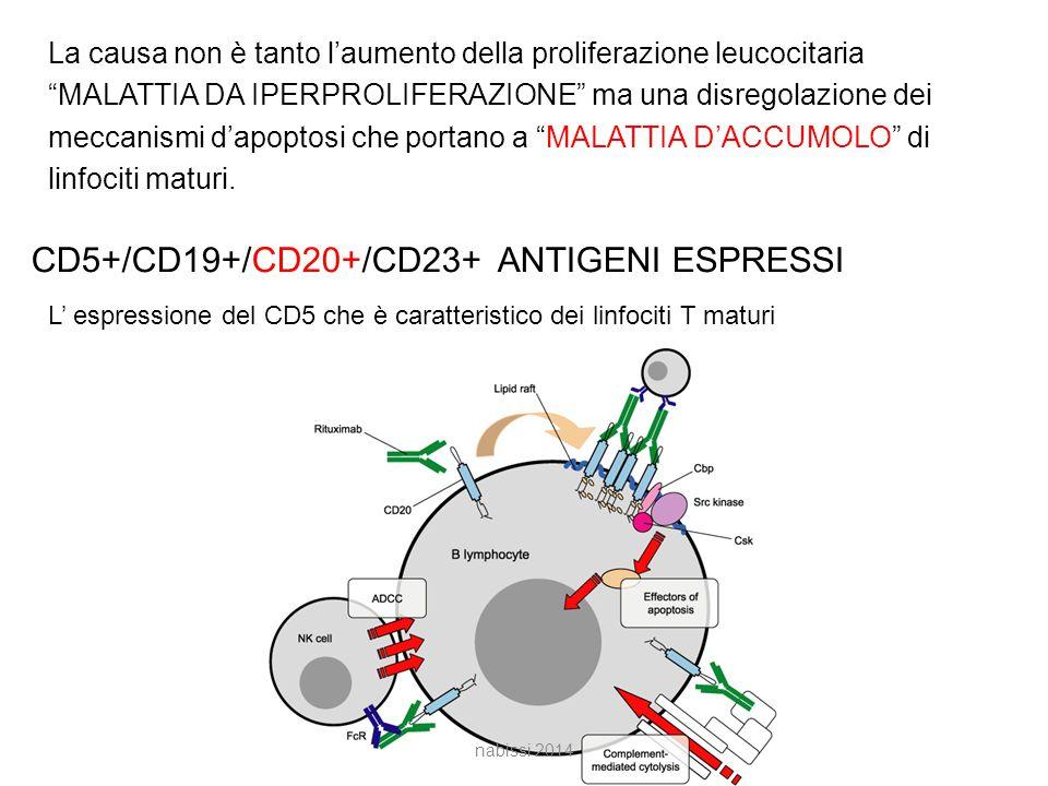 La causa non è tanto l'aumento della proliferazione leucocitaria MALATTIA DA IPERPROLIFERAZIONE ma una disregolazione dei meccanismi d'apoptosi che portano a MALATTIA D'ACCUMOLO di linfociti maturi.