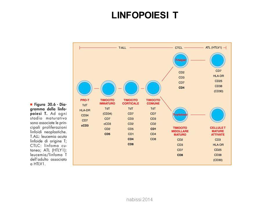 LINFOPOIESI T nabissi 2014