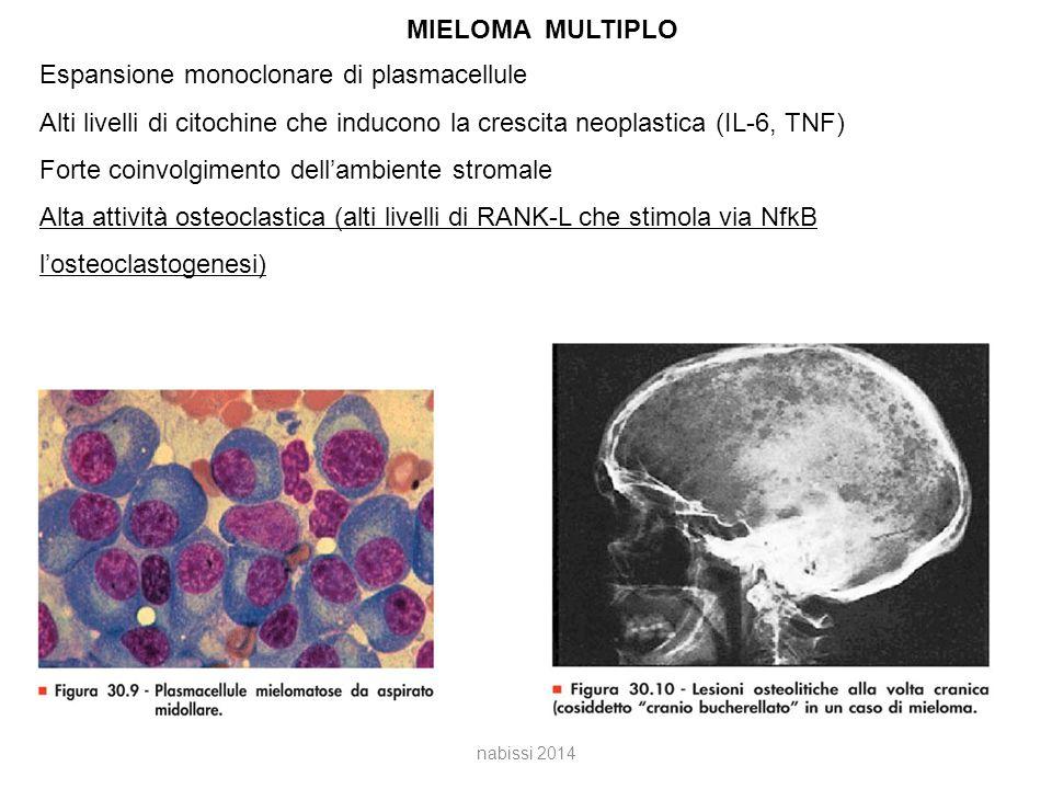 MIELOMA MULTIPLO Espansione monoclonare di plasmacellule Alti livelli di citochine che inducono la crescita neoplastica (IL-6, TNF) Forte coinvolgimento dell'ambiente stromale Alta attività osteoclastica (alti livelli di RANK-L che stimola via NfkB l'osteoclastogenesi) nabissi 2014