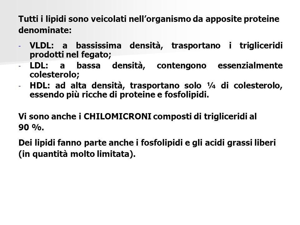 Tutti i lipidi sono veicolati nell'organismo da apposite proteine denominate: - - VLDL: a bassissima densità, trasportano i trigliceridi prodotti nel