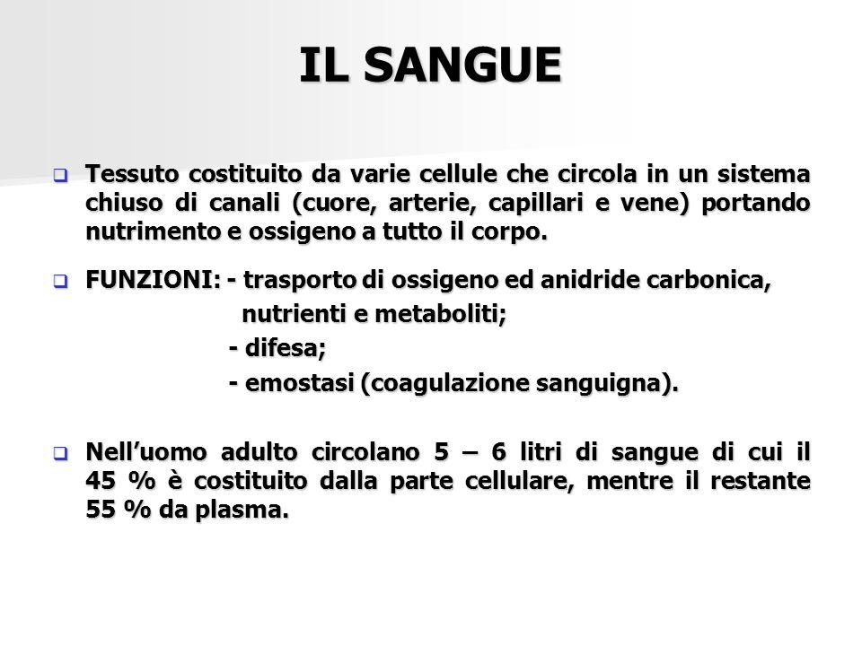 IL SANGUE  Tessuto costituito da varie cellule che circola in un sistema chiuso di canali (cuore, arterie, capillari e vene) portando nutrimento e os