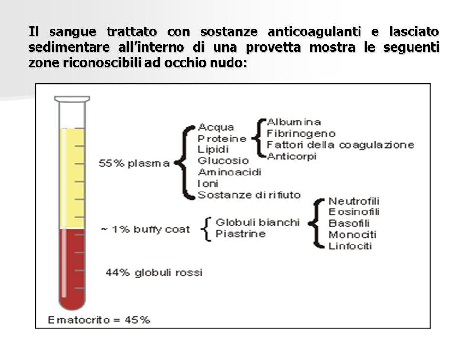 Il sangue trattato con sostanze anticoagulanti e lasciato sedimentare all'interno di una provetta mostra le seguenti zone riconoscibili ad occhio nudo