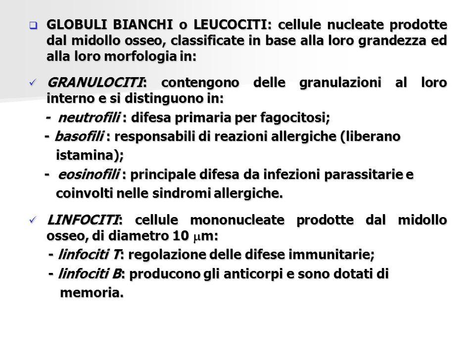  GLOBULI BIANCHI o LEUCOCITI: cellule nucleate prodotte dal midollo osseo, classificate in base alla loro grandezza ed alla loro morfologia in: GRANU
