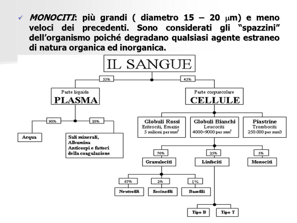  CONTENUTO PROTEICO: consiste nella determinazione di: - proteine totali - proteine totali (6,6 – 8,7 g/dl); (6,6 – 8,7 g/dl); - elettroforesi proteica - elettroforesi proteica che permette di che permette di determinare specifiche determinare specifiche proteine quali albumine proteine quali albumine e globuline (comprese e globuline (comprese le immunoglobuline o le immunoglobuline o anticorpi) anticorpi)