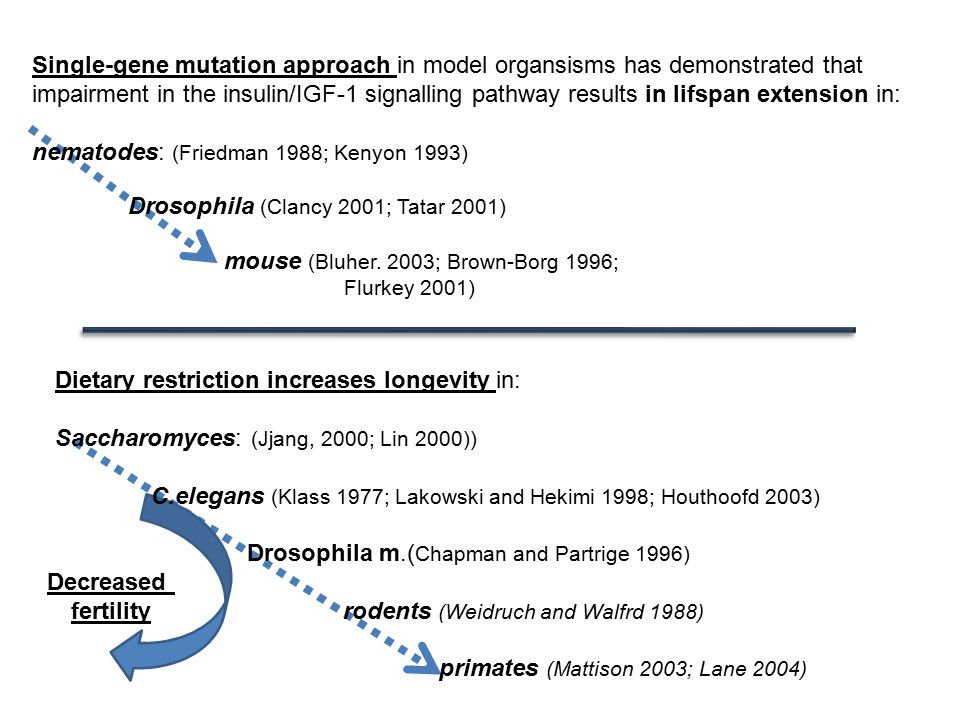 Single-gene mutation approach in model organsisms has demonstrated that impairment in the insulin/IGF-1 signalling pathway results in lifspan extension in: nematodes: (Friedman 1988; Kenyon 1993) Drosophila (Clancy 2001; Tatar 2001) mouse (Bluher.