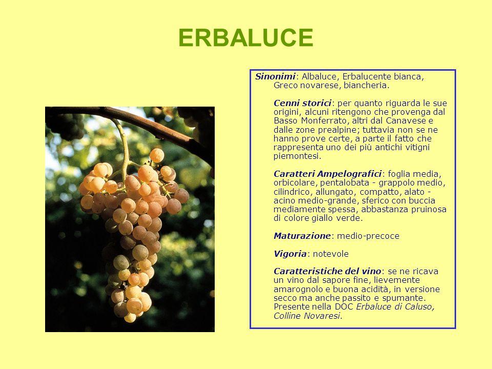 ERBALUCE Sinonimi: Albaluce, Erbalucente bianca, Greco novarese, biancheria.