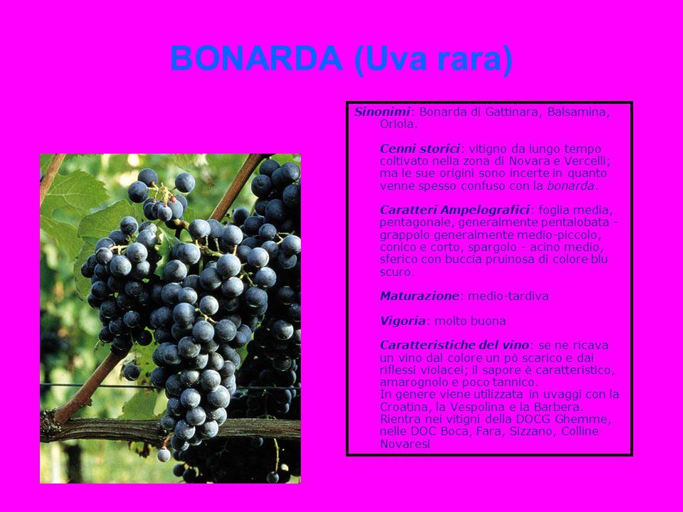 BONARDA (Uva rara) Sinonimi: Bonarda di Gattinara, Balsamina, Oriola. Cenni storici: vitigno da lungo tempo coltivato nella zona di Novara e Vercelli;