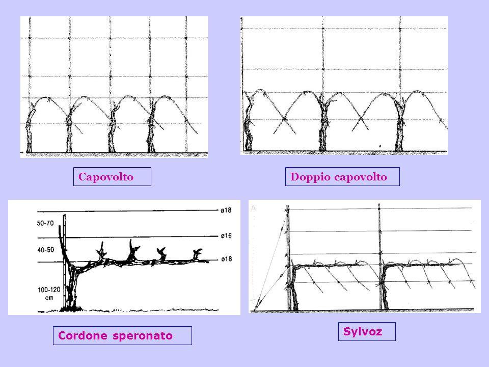 CapovoltoDoppio capovolto Cordone speronato Sylvoz