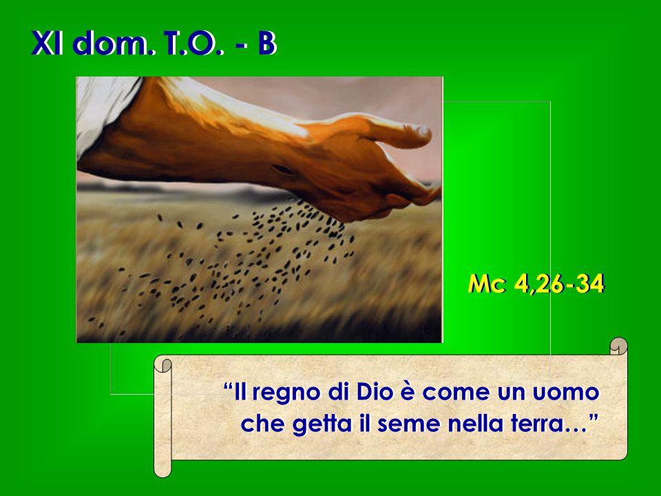 """XI dom. T.O. - B """"Il regno di Dio è come un uomo che getta il seme nella terra…"""" """"Il regno di Dio è come un uomo che getta il seme nella terra…"""" Mc 4,"""