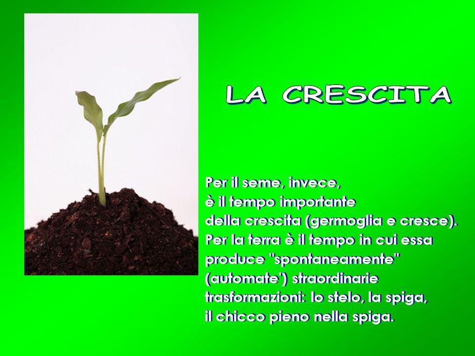Per il seme, invece, è il tempo importante della crescita (germoglia e cresce). Per la terra è il tempo in cui essa produce