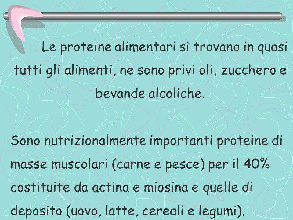 Le proteine alimentari si trovano in quasi tutti gli alimenti, ne sono privi oli, zucchero e bevande alcoliche. Sono nutrizionalmente importanti prote