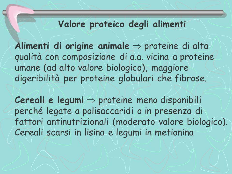 Valore proteico degli alimenti Alimenti di origine animale  proteine di alta qualità con composizione di a.a. vicina a proteine umane (ad alto valore