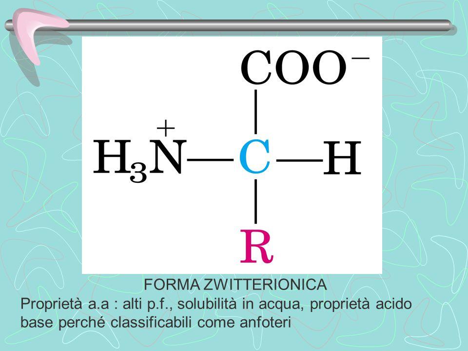 FORMA ZWITTERIONICA Proprietà a.a : alti p.f., solubilità in acqua, proprietà acido base perché classificabili come anfoteri