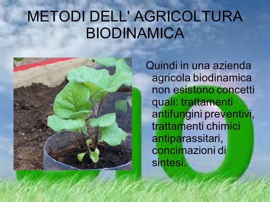 METODI DELL' AGRICOLTURA BIODINAMICA Quindi in una azienda agricola biodinamica non esistono concetti quali: trattamenti antifungini preventivi, tratt