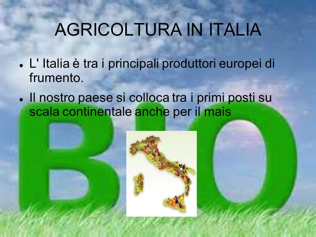 AGRICOLTURA IN ITALIA L' Italia è tra i principali produttori europei di frumento. Il nostro paese si colloca tra i primi posti su scala continentale