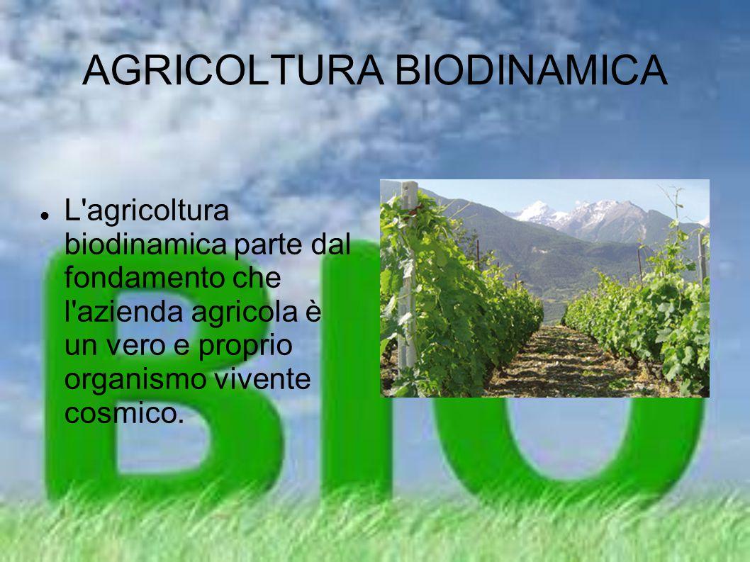 AGRICOLTURA BIODINAMICA L'agricoltura biodinamica parte dal fondamento che l'azienda agricola è un vero e proprio organismo vivente cosmico.