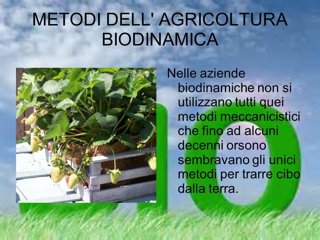 METODI DELL AGRICOLTURA BIODINAMICA Quindi in una azienda agricola biodinamica non esistono concetti quali: trattamenti antifungini preventivi, trattamenti chimici antiparassitari, concimazioni di sintesi.