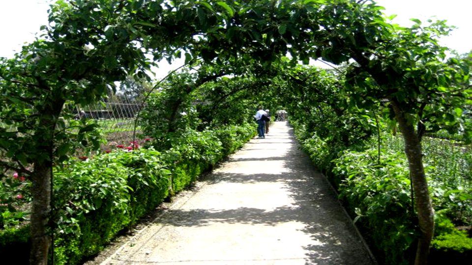 La Giungla è un'area del giardino da non perdere, con vegetazione lussureggiante, piantagioni esotiche di banani, rabarbari giganti e tunnel di altiss
