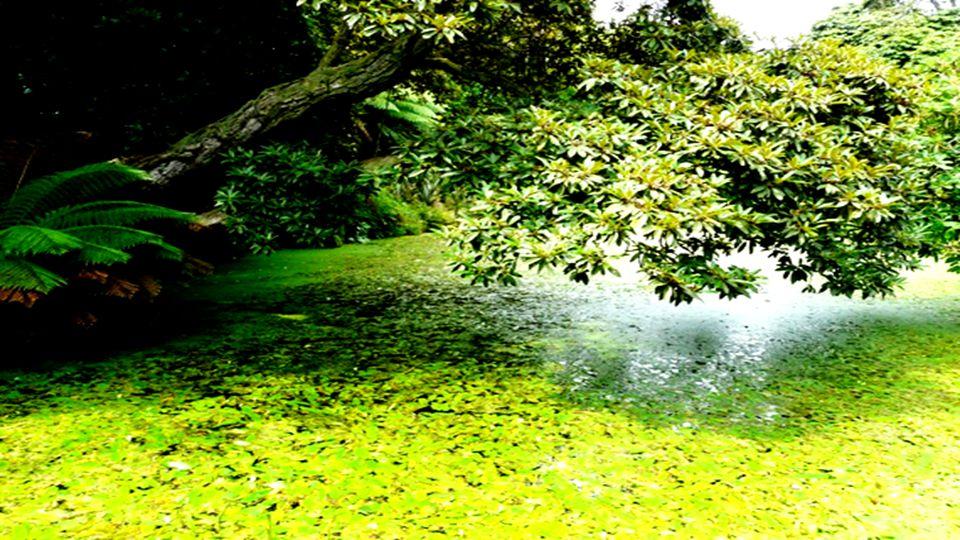 La palude si trova nel centro della tenuta e vi si può osservare a distanza ravvicinata la fauna selvatica