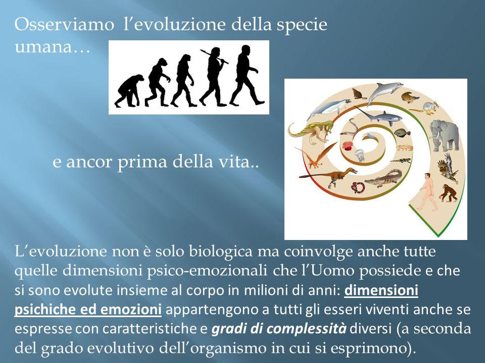 Osserviamo l'evoluzione della specie umana… e ancor prima della vita..