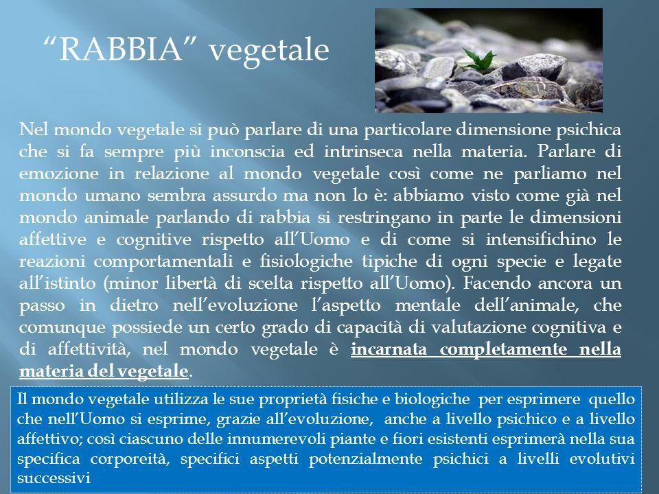 Nel mondo vegetale si può parlare di una particolare dimensione psichica che si fa sempre più inconscia ed intrinseca nella materia.