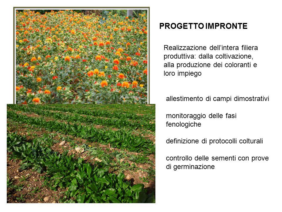 PROGETTO IMPRONTE allestimento di campi dimostrativi monitoraggio delle fasi fenologiche definizione di protocolli colturali controllo delle sementi con prove di germinazione Realizzazione dell'intera filiera produttiva: dalla coltivazione, alla produzione dei coloranti e loro impiego