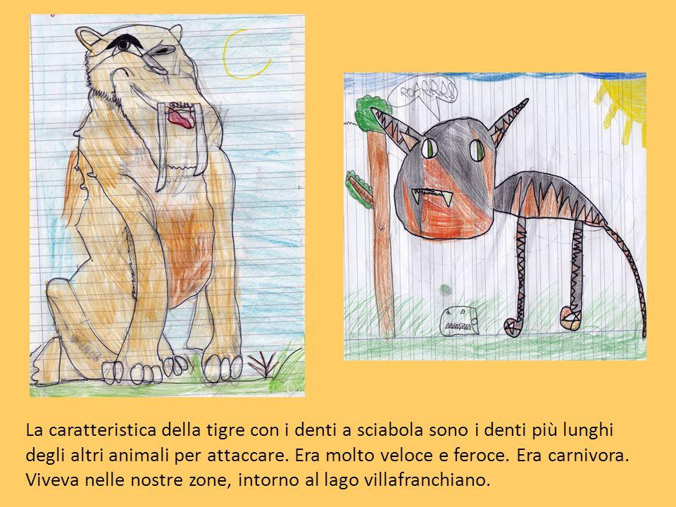 La caratteristica della tigre con i denti a sciabola sono i denti più lunghi degli altri animali per attaccare. Era molto veloce e feroce. Era carnivo