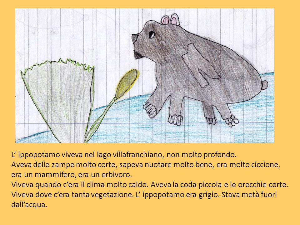 L' ippopotamo viveva nel lago villafranchiano, non molto profondo. Aveva delle zampe molto corte, sapeva nuotare molto bene, era molto ciccione, era u