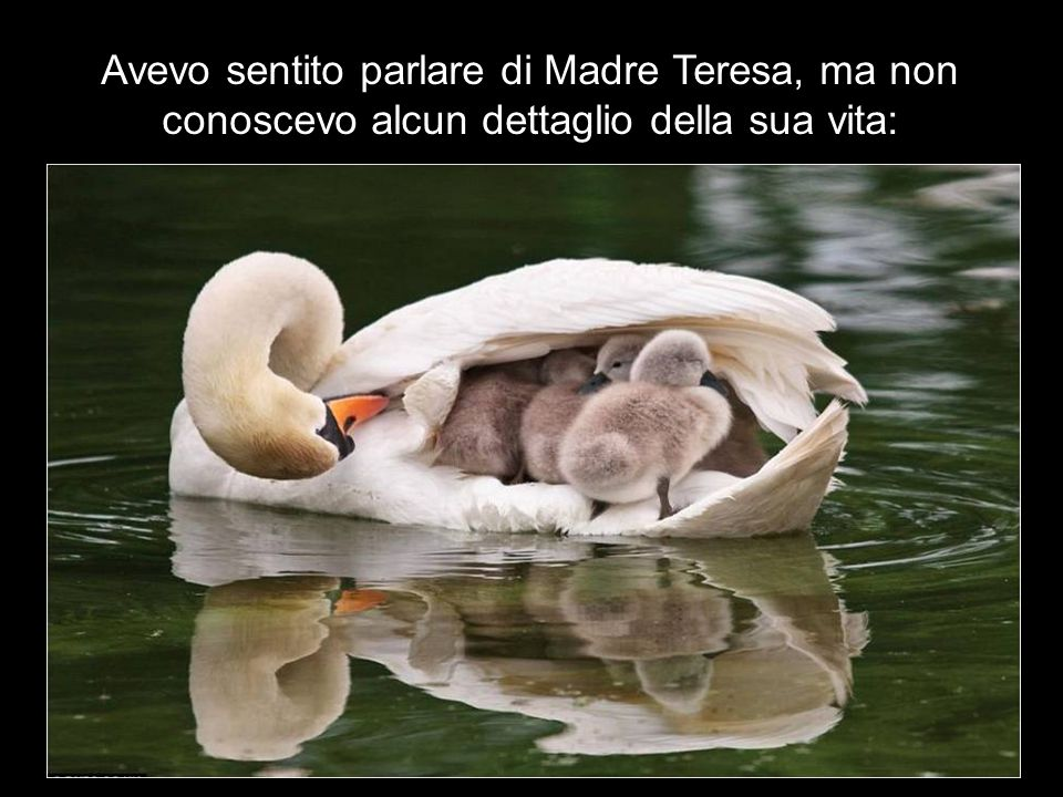Avevo sentito parlare di Madre Teresa, ma non conoscevo alcun dettaglio della sua vita: