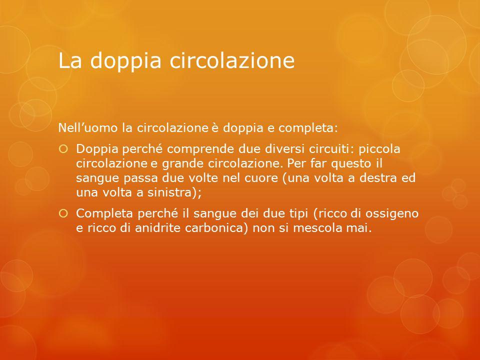 La doppia circolazione Nell'uomo la circolazione è doppia e completa:  Doppia perché comprende due diversi circuiti: piccola circolazione e grande circolazione.