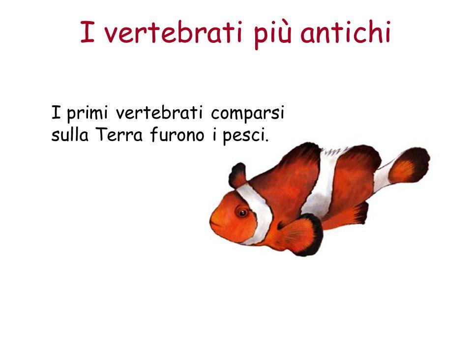 I vertebrati più antichi I primi vertebrati comparsi sulla Terra furono i pesci.