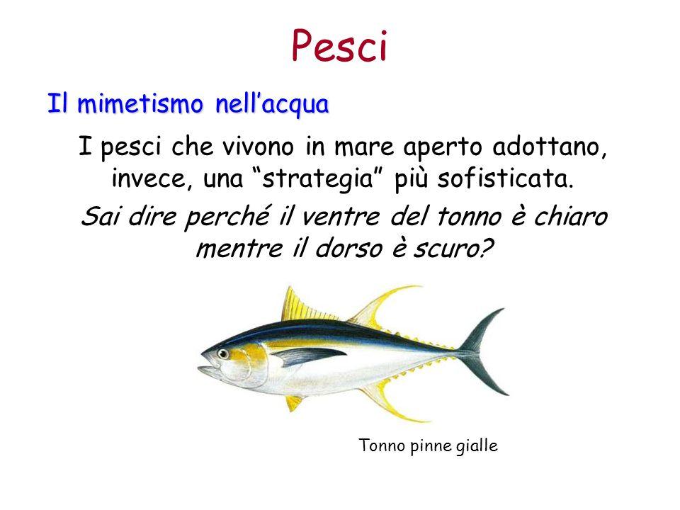 """Pesci Il mimetismo nell'acqua I pesci che vivono in mare aperto adottano, invece, una """"strategia"""" più sofisticata. Sai dire perché il ventre del tonno"""