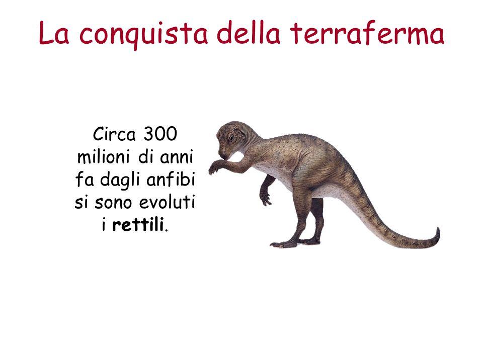 La conquista della terraferma Circa 300 milioni di anni fa dagli anfibi si sono evoluti i rettili.