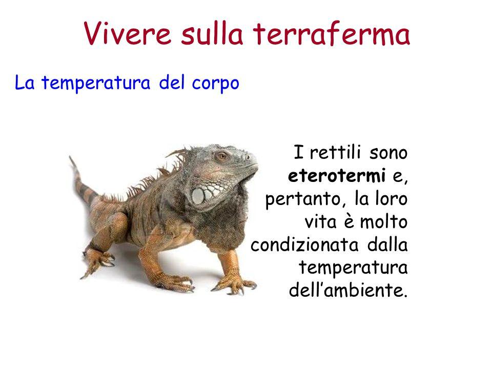 Vivere sulla terraferma La temperatura del corpo I rettili sono eterotermi e, pertanto, la loro vita è molto condizionata dalla temperatura dell'ambie