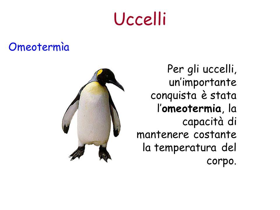 Uccelli Omeotermìa Per gli uccelli, un'importante conquista è stata l'omeotermia, la capacità di mantenere costante la temperatura del corpo.