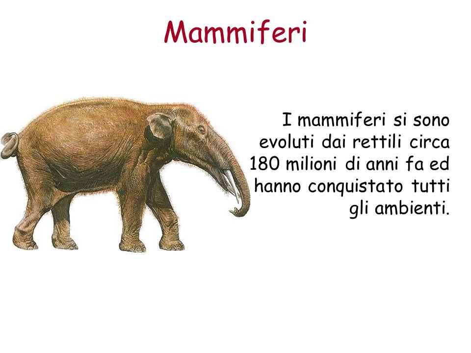 Mammiferi I mammiferi si sono evoluti dai rettili circa 180 milioni di anni fa ed hanno conquistato tutti gli ambienti.