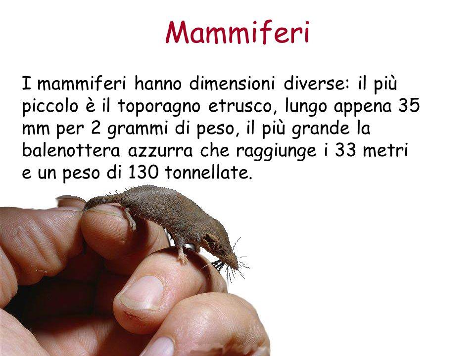 Mammiferi I mammiferi hanno dimensioni diverse: il più piccolo è il toporagno etrusco, lungo appena 35 mm per 2 grammi di peso, il più grande la balen