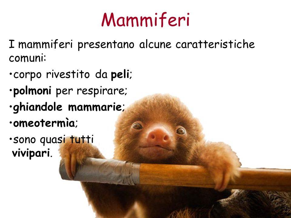 Mammiferi I mammiferi presentano alcune caratteristiche comuni: corpo rivestito da peli; polmoni per respirare; ghiandole mammarie; omeotermìa; sono q